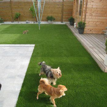 Honden-en-nepgras